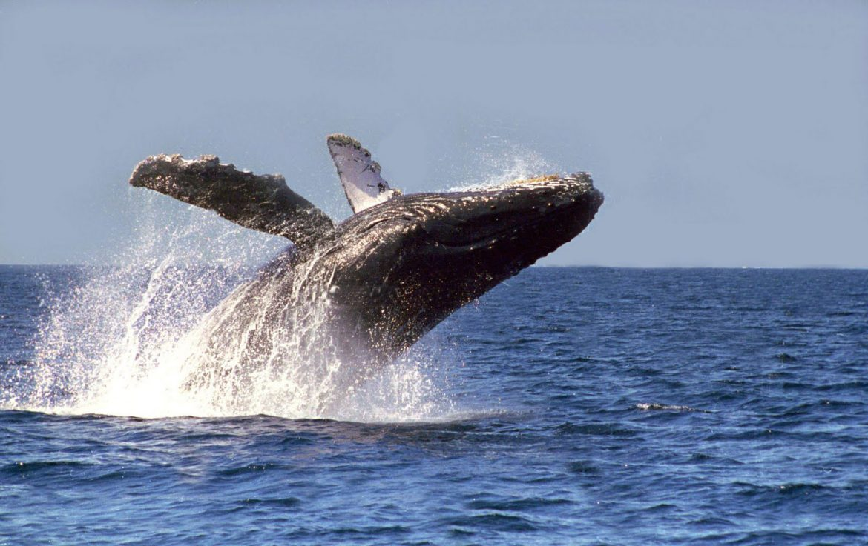 Avistamiento de Ballenas, BCS